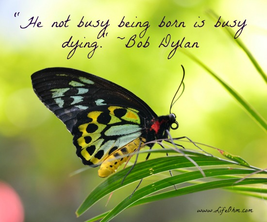 """He not busy being born is dying."" Bob Dylan Quote"